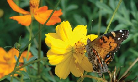 Plant a pollinator garden and enjoy its many benefits