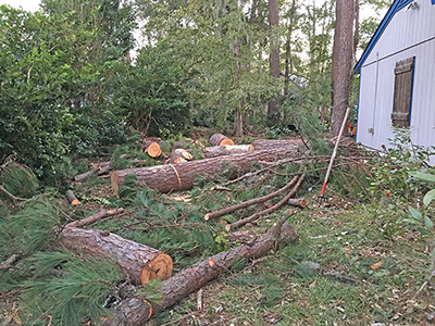 Yards, lawns, gardens could use post-Matthew TLC