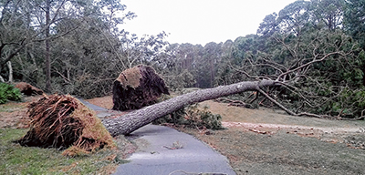 Hurricane Matthew's effect on Bluffton's golf courses