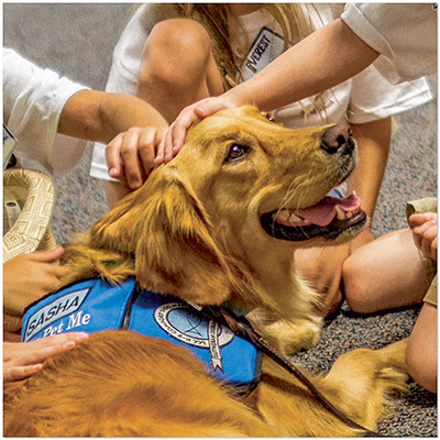 K-9 Comfort Dog Sasha soothes nerves, spreads calm