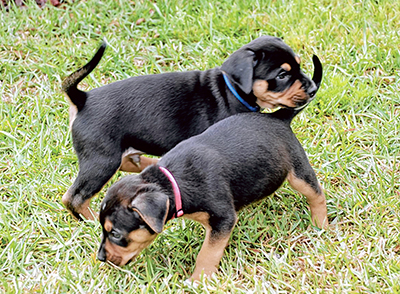 Ask questions when choosing a dog from a breeder