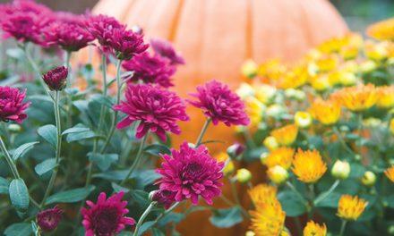 With cooler temps, start on autumn garden chores