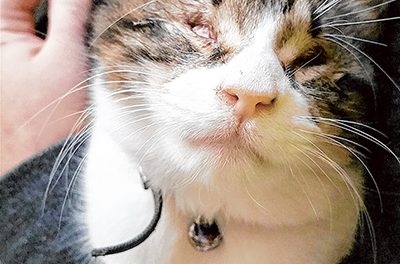 Blind cat is beautiful  in the eyes of her foster