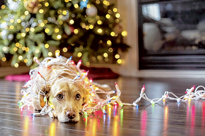 Hounds for the holidays? Keep these tips in mind