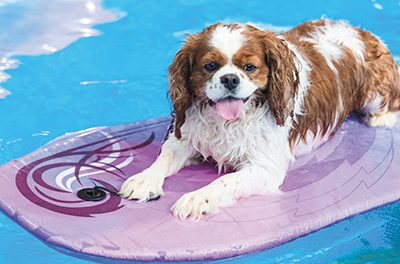 Teaching dogs water safety a smart idea on the coast