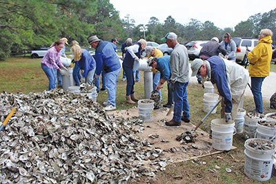 Collected oyster shells to be used for reef off Page Island