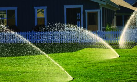 Mid-summer garden chores include watering, insect control