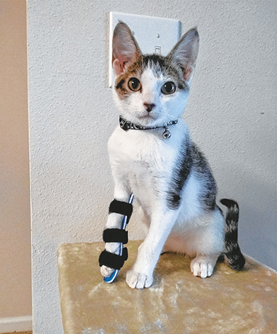 Special kitten gets a leg up on the New Year