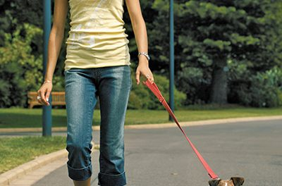 Effective training protocols for a leash reactive dog