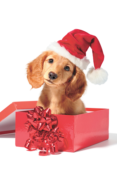 'Tis the season for training new gift puppies