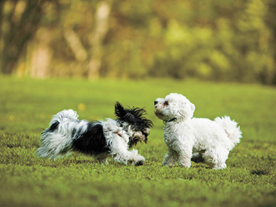 Don't let Southern parasites get the best of your dog