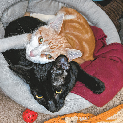 Shy shelter cats form beautiful, unbreakable bond