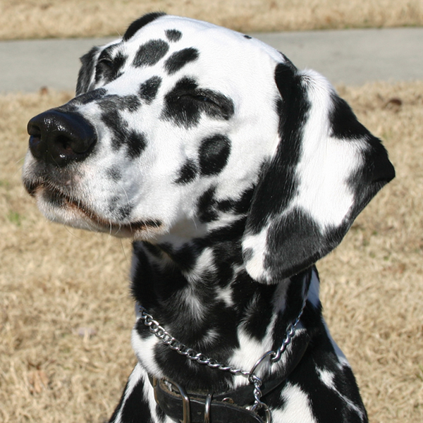 New Canine Good Citizen classes to start soon