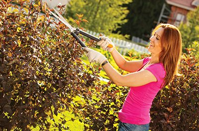 Prune azaleas, other shrubs now for full bloom next spring