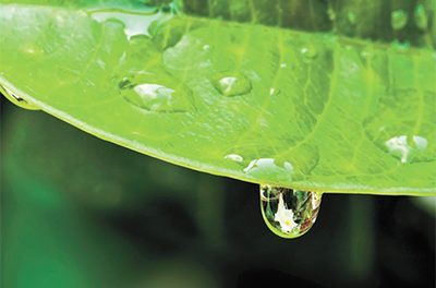 Conserving water for garden chores helps preserve resources