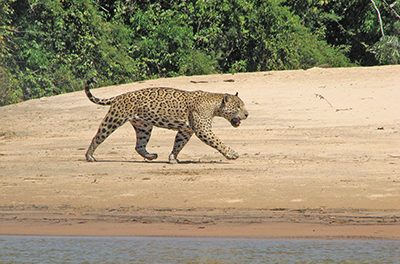 Eco-tourism in Brazil's Pantanal poses environmental dilemma