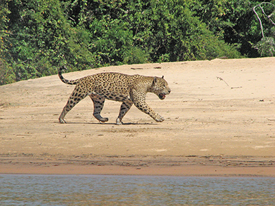 Eco-tourism in Brazil's Pantanal poses environmental dilemma