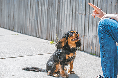 Dogs need on-going training from puppies to adults