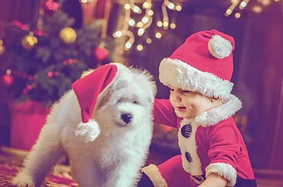 New puppies add excitement, fun, teaching moments to holidays
