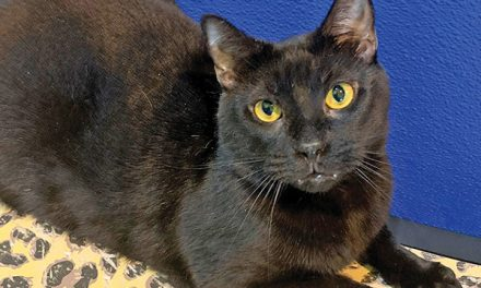 Shelter cat for 1,007 days still waits for his person