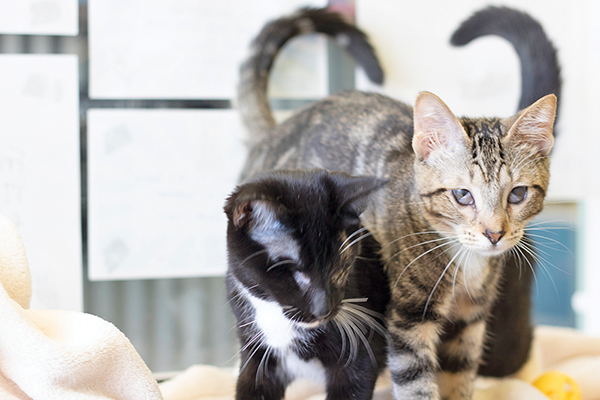Sister shelter kittens 'see' things a little differently