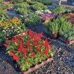 Paradise promises plentiful places to pursue plant passion