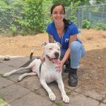 Hunky shelter dog seeks caring, committed companion